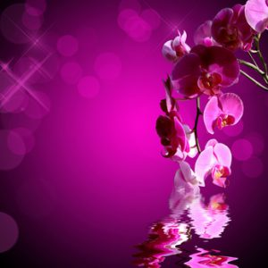 Orchidée rose, fond carré bokeh