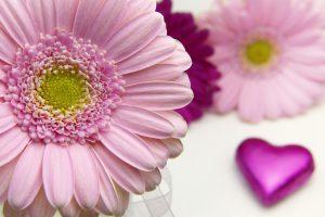 flower-3086546_1920