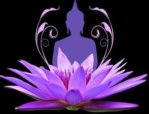 lotus et bouddha violet1 coupée 920