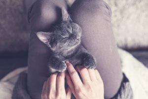 Süßes Kätzchen macht ein Nickerchen