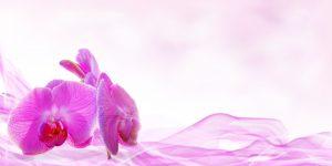 Orchidée1382475_1920